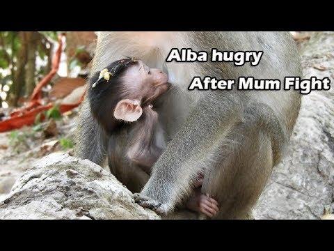 GREAT TIME   Poor Alba Full Milk Mom After Fight   Anna Feel So Sorry ,allow Milk Alba Till Full