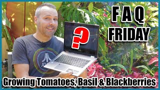 FAQ FRIDAY - Growing Tomatoes, Basil and Blackberries... and More! Answering YOUR garden questions.