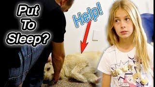 Dad Tells Kids The Dog Is Being Put To SLEEP!!