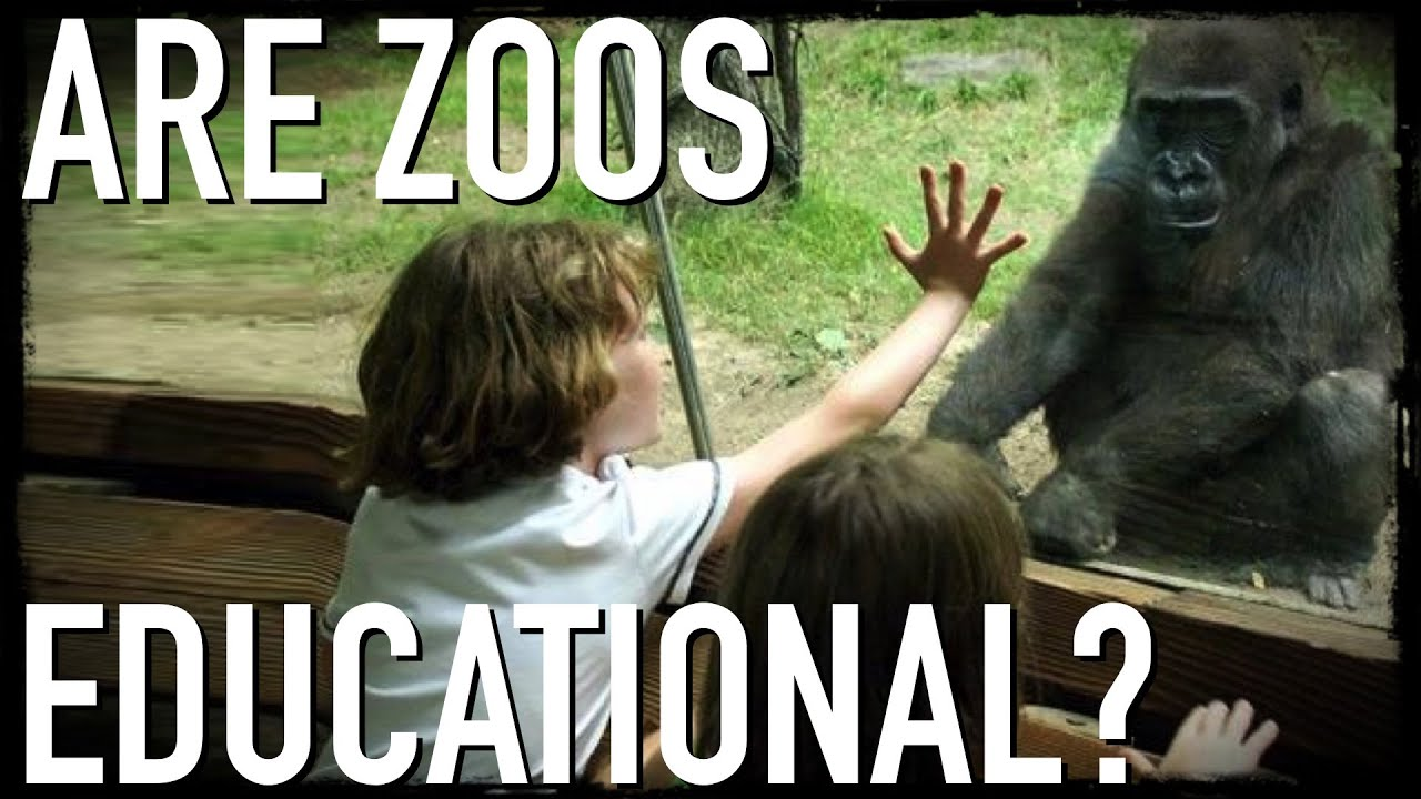 zoos do more harm than good Essays - largest database of quality sample essays and research papers on zoos do more harm than good.