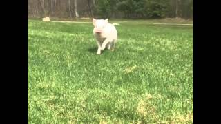 Abby the Pink Piggy: Running Slow Motion