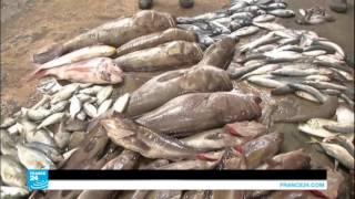صيادو السمك غير راضين بالمسافة التي حددتها إسرائيل للصيد قبالة ساحل غزة