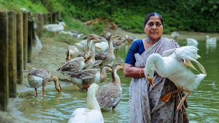 Swan Curry with Rice Roti Making Recipes by Village Food Life - Swan curry recipe