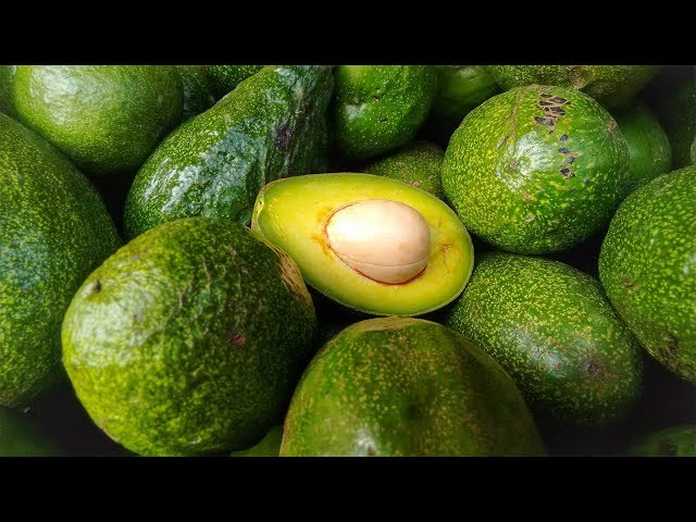 avocado ökobilanz