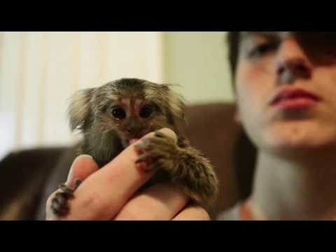 Marmoset monkey playing!