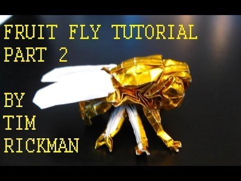 Fruit Fly Tutorial, Tim Rickman (Part 2)