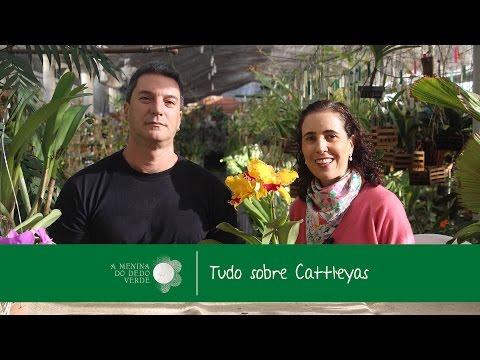Nô Figueiredo no Orquidário Paulista: Cultivo de Cattleyas com Reinaldo Ilaci