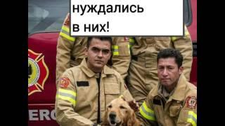 Очень грустное видео про бездомных животных!!