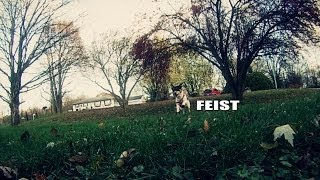 Feist: The Story of the American Rat Terrier
