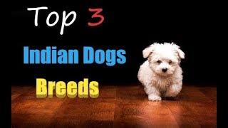 Top 3 Indian Dogs breeds | you never knew about
