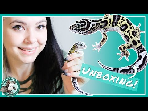 Unboxing My New Leopard Gecko!