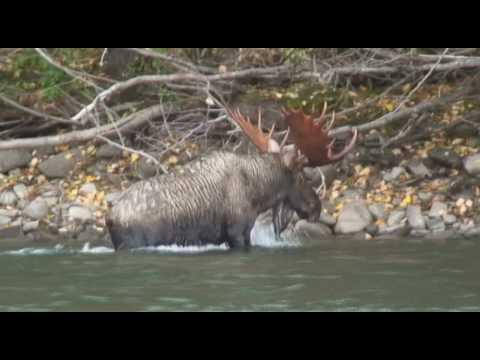 Fly Fishing For Sustut River Steelhead - Part 1
