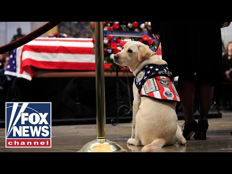 Service dog Sully, ADA beneficiaries pay respects to Bush 41