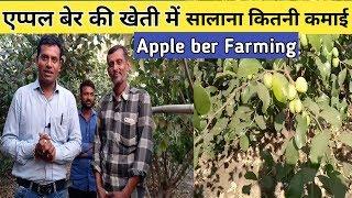How to Start Apple Ber Farming एप्पल बेर की खेती कैसे करे सालाना कितना फायदा।