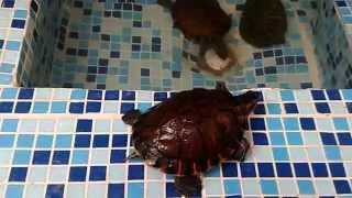 Laguinho de tartaruga com veveiro de piriquitos