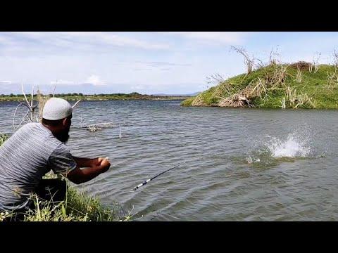 🎣Rohu Fish Catching in Krishna River|🐟Rohu FISHING|Awesome FISHING Video|Unique Fishing|Rohu Fishing
