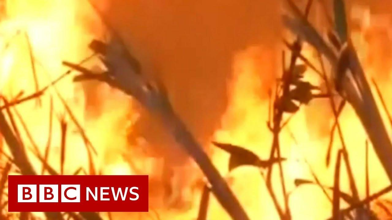BBC News:Amazon fires: Brazil's president v conservationists - BBC News