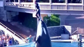K LLER WHALE THROWS TRA NER  N A R AT SEA WORLD SAN D EGO CAL FORN A 2009