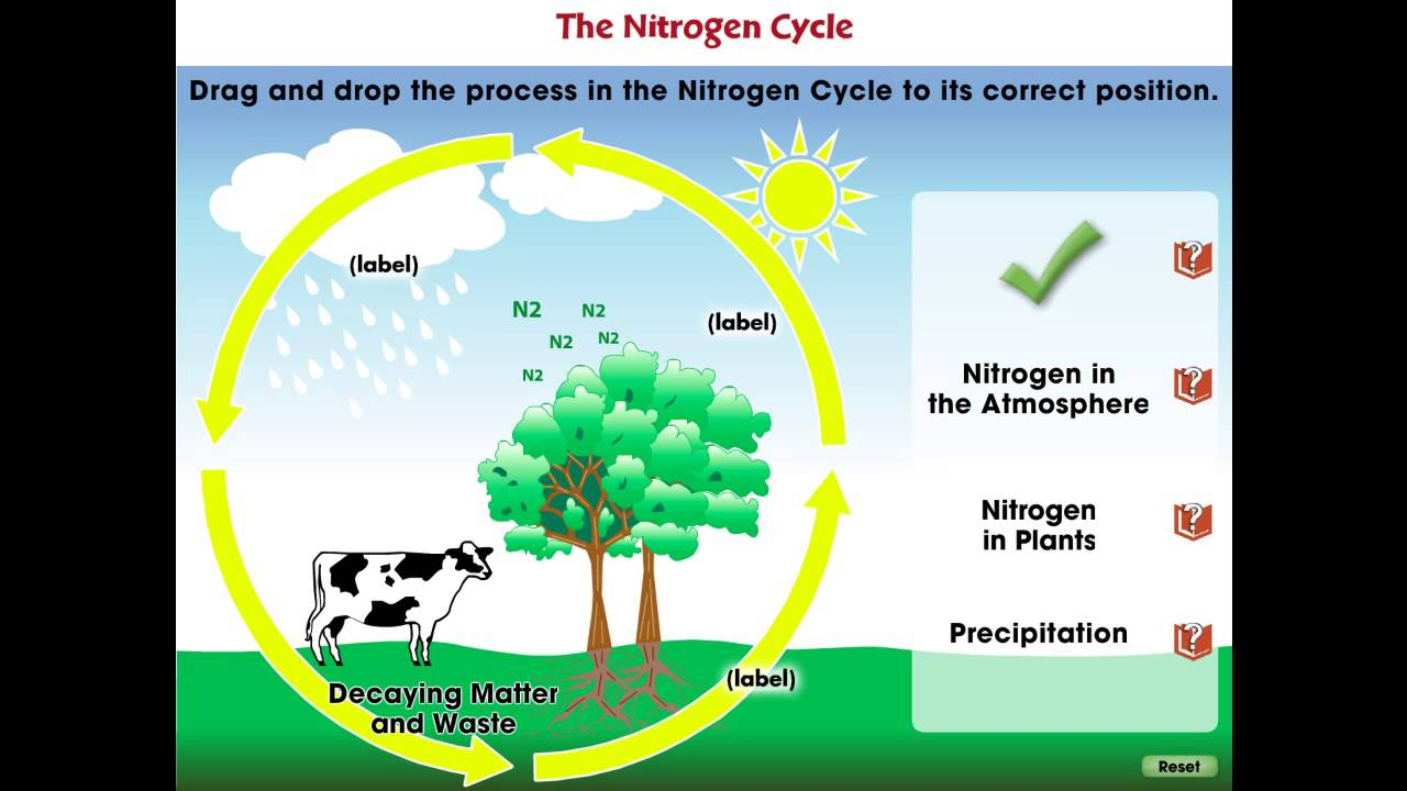 CC7747 Global Warming CAUSES: The Nitrogen Cycle Mini - YouTube