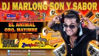 El Animal - Orq. Mayimbe - Dj Marlong Son y Sabor 2015