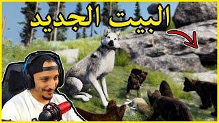 حياة الذيب #9   رحلة الى البيت الجديد Wolf Quest