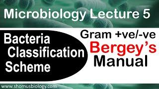 Мікробіологія лекція 5 |проти грампозитивних грамнегативних (цей посібник)