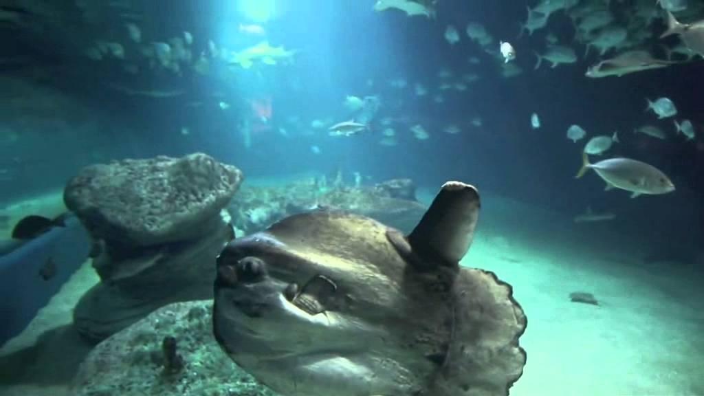 Parco oceanografico di valencia youtube for Oceanografico valencia