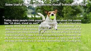 How to Train Your Dog? Wrong and Correct Ways