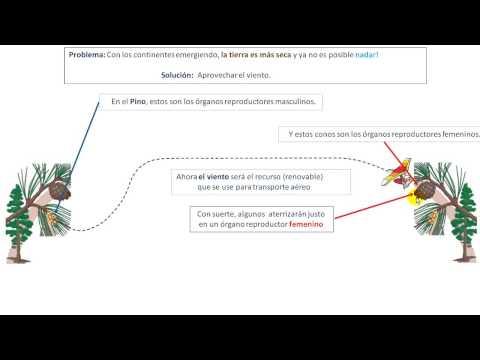 Evolución Era Paleozoica