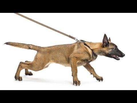 Curso CPT Adestramento de Cães de Guarda