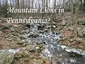 The Last Mountain Lion in Pennsylvania?