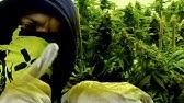 Vollbluthustler - Das Leben Mal Auf Drogen Planen (produziert von 86kiloherz)