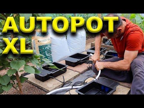 Indoor Hydroponic System - Autopot XL - Chilli Plant