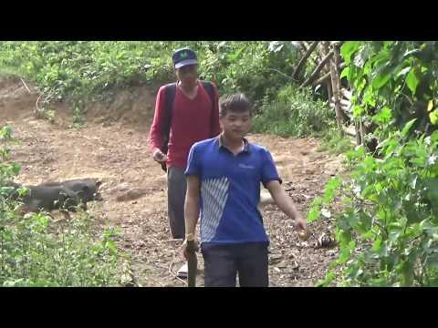 ncig saib hmong  yos hav zoov/hmong hunting  23/9/2017