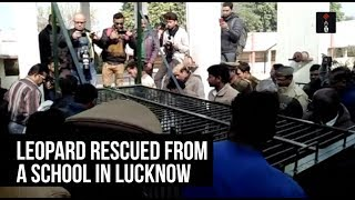 Leopard Rescued From A School In Lucknow