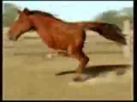 Caballo de dos patas youtube - Precio de somier con patas ...