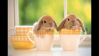 Поилка для кроликов - бесплатно!