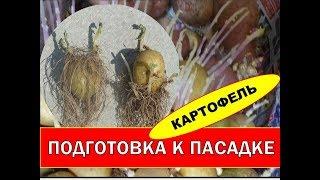 Картофель - Выращивание раннего картофеля. Спорные Способы Проращивания Картофеля.