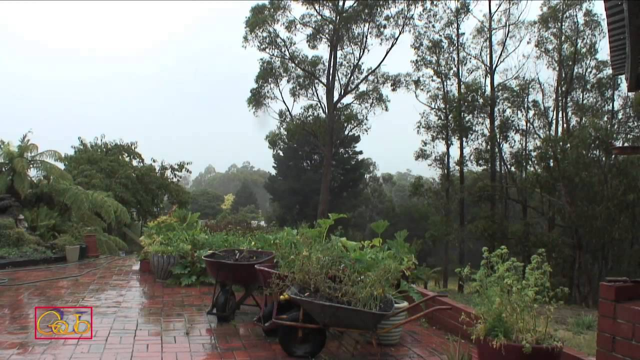 One Hour Of Heavy Rain Hd Sound Sound Of Nature Sleep