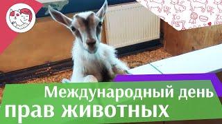 Международный день прав животных на ilikepet