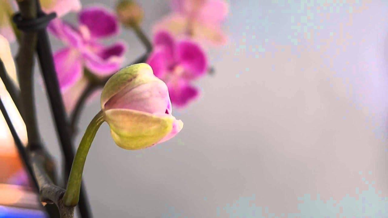 В интернет-магазине этнополис вы можете купить натуральное варенье из цветов липы с доставкой по москве и россии. Мы предлагаем только.