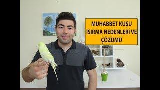 Muhabbet Kuşu Isırma Sorunu