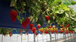 딸기 키높은 수경재배-…
