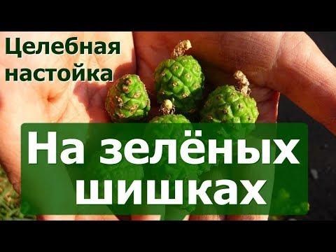 Целебная настойка на зелёных шишках