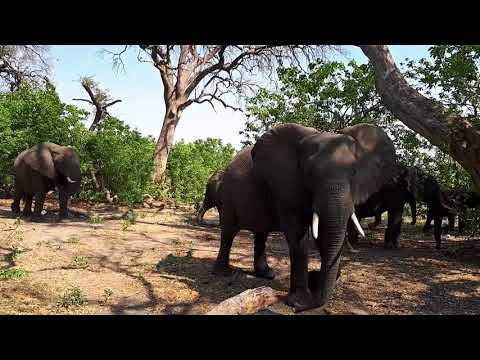 Highlights from a Botswana Safari