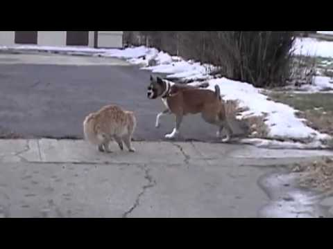 FEARLESS CAT VS DOG