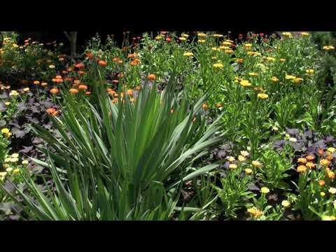 Flower Garden Lullaby By Leontine Hartzell And Charlie Braun, Aka Omaja. Www.omajamusic.com