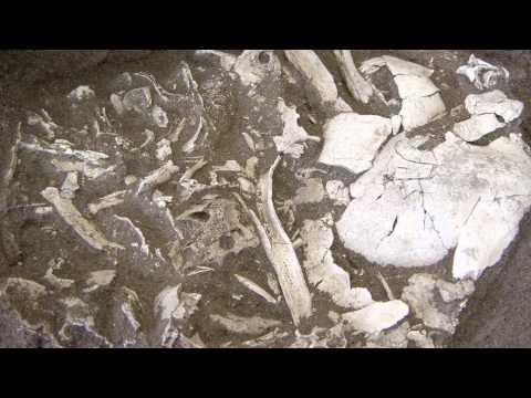 De grootste dodenakker. Honderden heuvels bij Weert (NWO Odyssee 5)