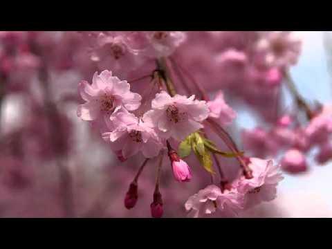 情人的眼泪。Ching Ren Der Yen Lei 。潘秀瓊。Uncle James Sia &...