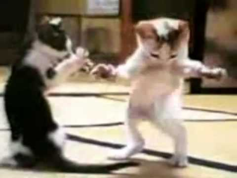 القطه وندى thumbnail
